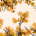 The Wind That Blows The leaves by Shaun Colin Bell