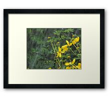 Rudebeckias in Heavy Rain Framed Print