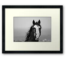 Strong Horse Framed Print