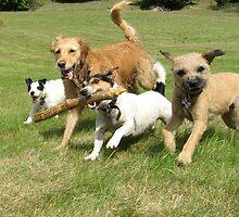 The Pack having fun by Guy Stewart