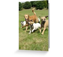 The Pack having fun Greeting Card