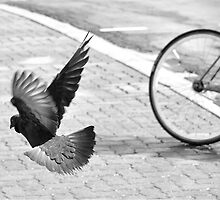 Bike or Flight by Valerie Rosen