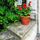 Pot of Geraniums on Stoop by Susan Savad