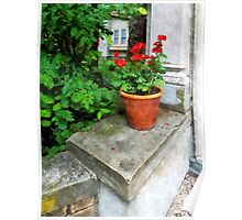 Pot of Geraniums on Stoop Poster