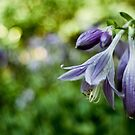 Purple Flower by David Preston