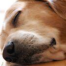 Sweet dreams by LadyFi