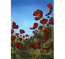 Red Poppies, Blue Sky Photographic Print