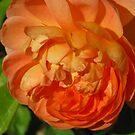 A special orange blossom by Christine Ford