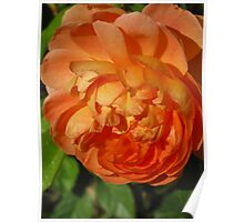 A special orange blossom Poster