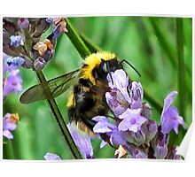 A  Buzz Filter For A Buzzing Bee Poster