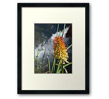 flower spike flowing water Framed Print