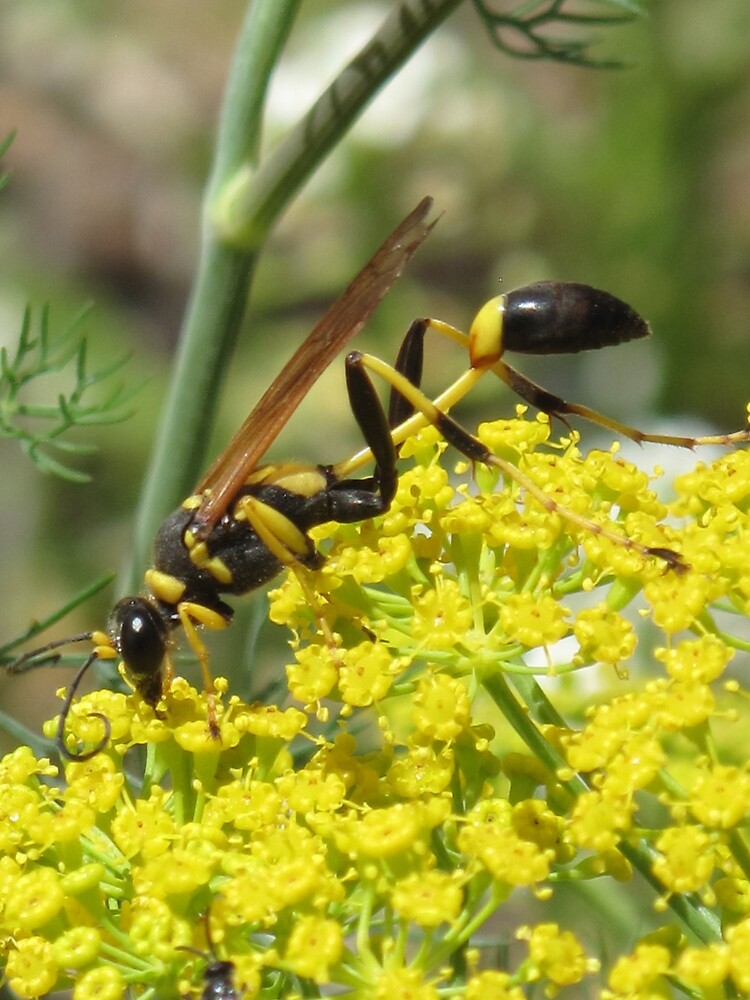 wasp wasted by Christine Ford