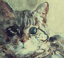 Corfu Cat  by LoveringArts