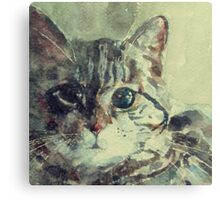 Corfu Cat  Canvas Print