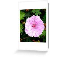 Singled Out!  Greeting Card