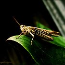 Hopper - Grasshopper by angelimagine
