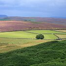 Derbyshire Dales Near Stanedge Edge  by Tom Curtis