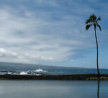 Lone Palm Hilo Bay by ronholiday