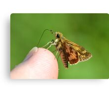 A Grass Skipper Cleaning Under My Fingernails Canvas Print