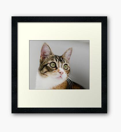 Mallory Moo Framed Print