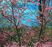 REDBUD TREE by Chuck Wickham