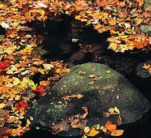 AUTUMN LEAVES by Chuck Wickham