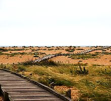 Coastal path to Dungeness by capelston