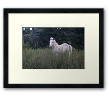 Highlands Pony Framed Print
