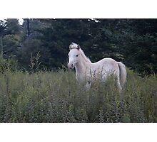 Highlands Pony Photographic Print
