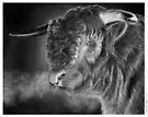 Antony the bull by Ronny Hart