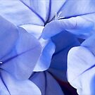 Plumbago's Beautiful Blues by paintingsheep
