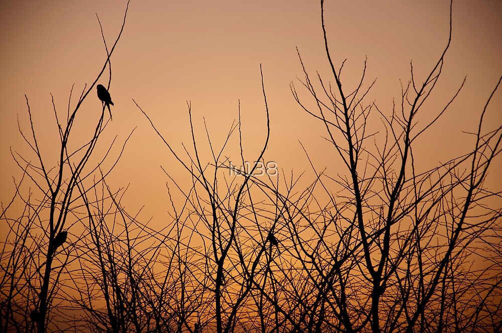 Birds in the dead Winter trees at sunrise, Quirindi, NSW by lu138