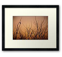 Birds in the dead Winter trees at sunrise, Quirindi, NSW Framed Print