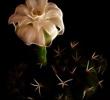 Prickles And Enigmatical White Flower by Atılım GÜLŞEN