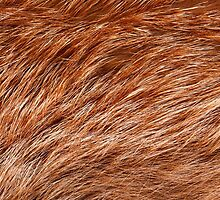 Red fox rough fur texture cloth abstract by Arletta Cwalina