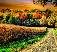 Autumn In Amishville  by Donnie Voelker