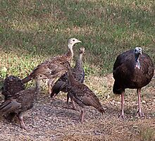 Turkeys are Grazing by Sherry Hallemeier