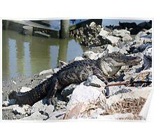 I'll take My Gator on the Rocks Poster