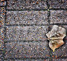 Still Life 9 by Jonathan Garrett