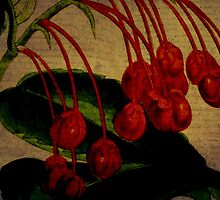 Berries by Debbie Robbins