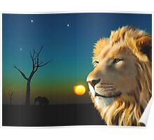African Lion wildlife Portrait Poster