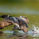Walk On water by Bill Maynard