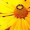 Orange or Yellow Flowers