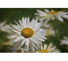 Dreaming of daisies Photographic Print