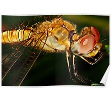 hot dragon fly Poster