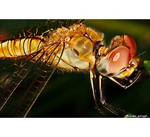 hot dragon fly Photographic Print