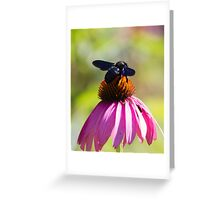 bee on echinacea in the garden Greeting Card