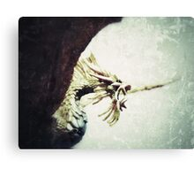 Pacatus Gold Dragon Canvas Print