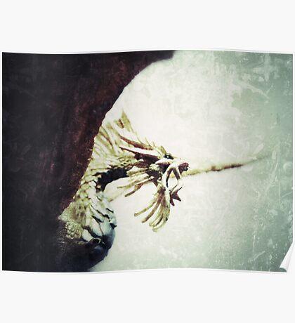 Pacatus Gold Dragon Poster