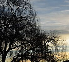 sombre willow by Sejwa